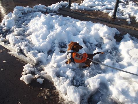 雪の上に初ちっこ