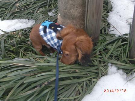 雪を避ける