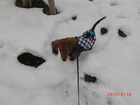 ママが雪の中を入って行く