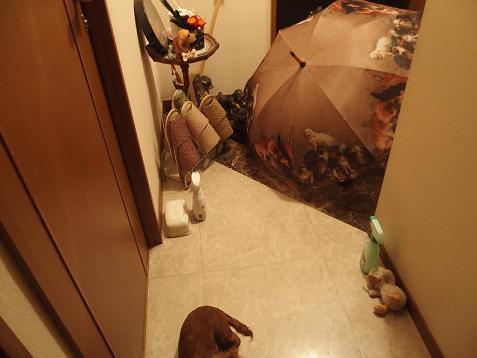玄関に傘を置いたでしゅ
