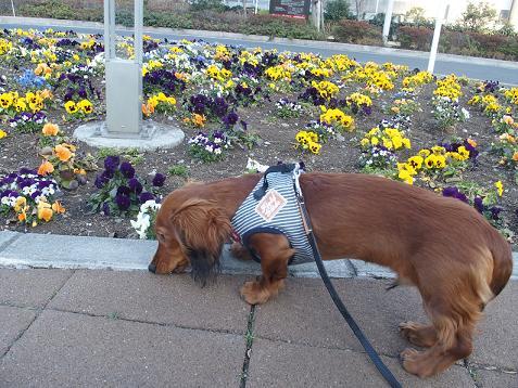 お花も咲いてましゅ