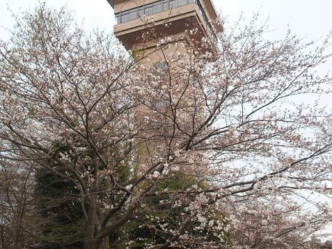 桜はまだ少しでしゅ