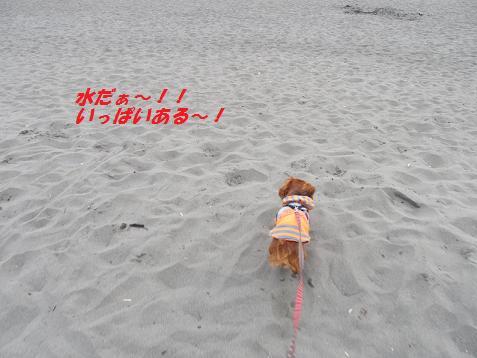 水だぁ~!海へ一直線