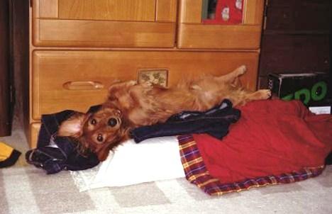 枕の上で寝てます