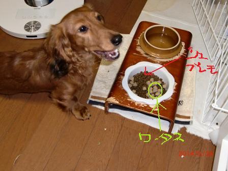 ごはん食べてまちゅ
