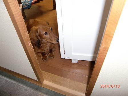 入っちゃダメ!に入りましぇん