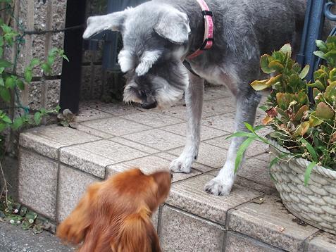 犬が通ると吠える、すみれちゃん