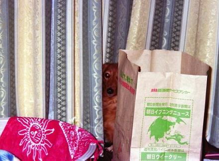 マロちゃん、どこ?