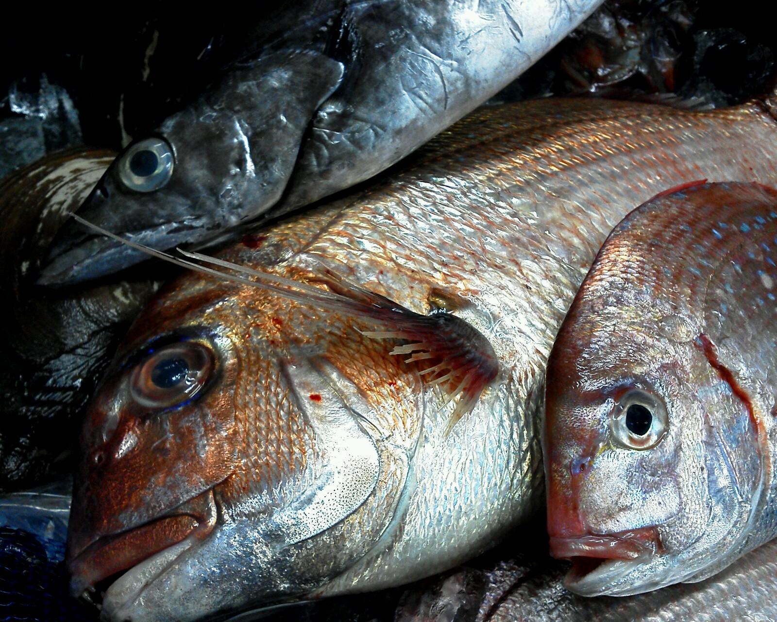 魚0414