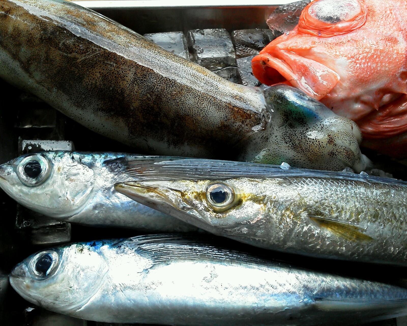 魚0530