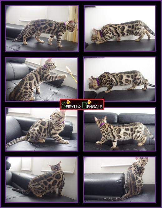 2013 Last Kitten P 7