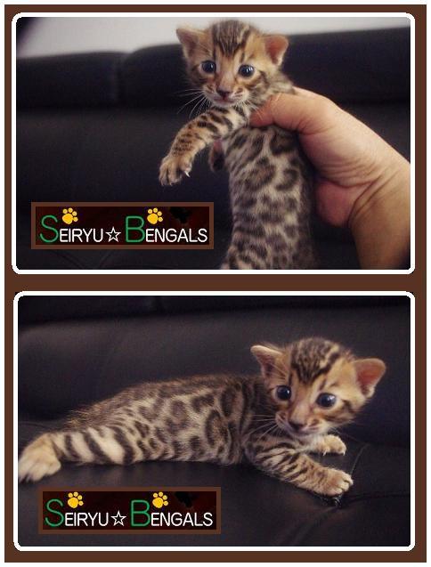 2014 Kitten C