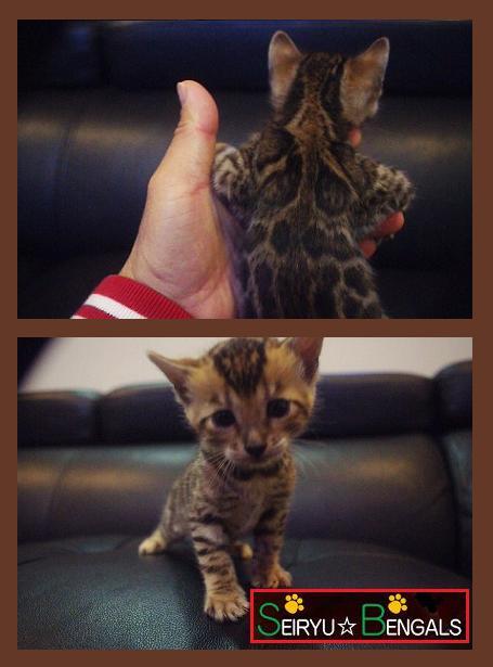 顔2014 Kitten Type[G]