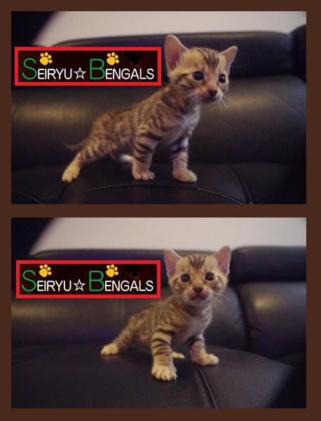2014 kitten Type [M] 顔