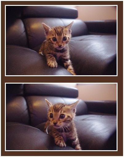 2014 kitten Type [Q] 顔