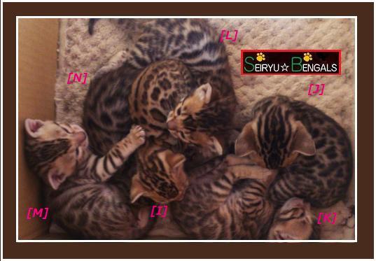 2014 Kitten