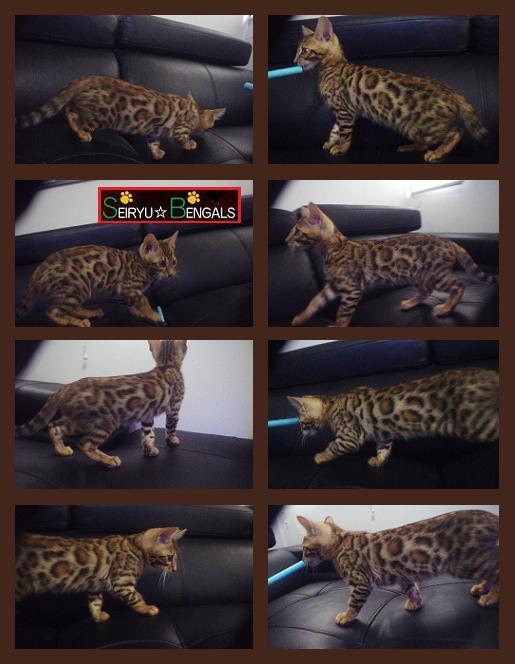 2014 Kitten 個体別1