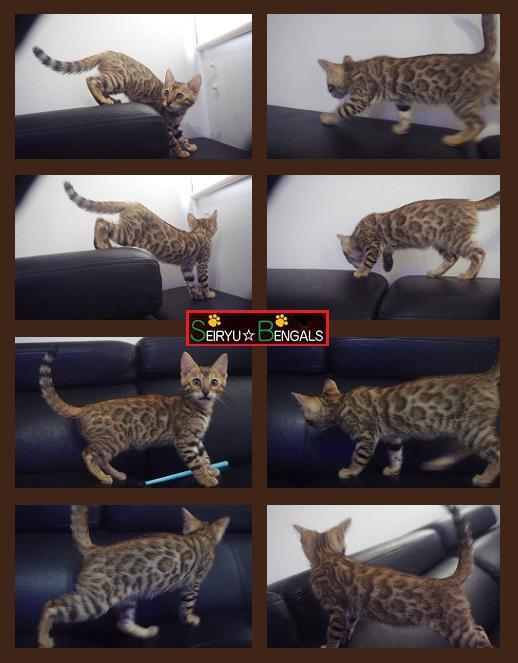 2014 Kitten 野外 5