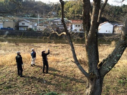 20140216_桜の枝切り_001