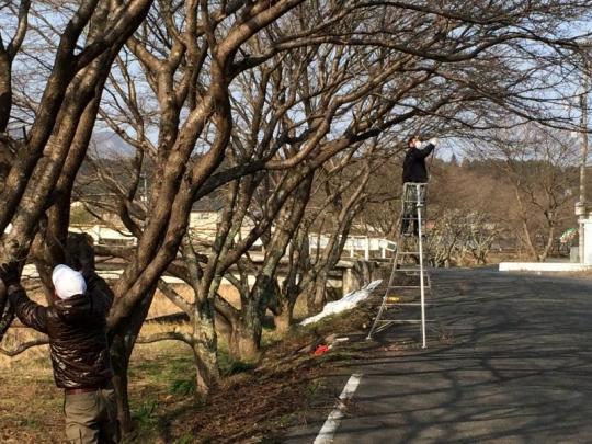 20140216_桜の枝切り_004