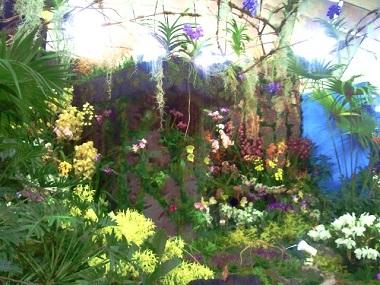 水と光と色とりどりの蘭達