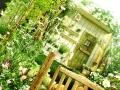 緑と白の庭