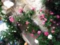 白壁と桃薔薇