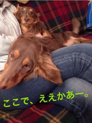 CASYUU5U.jpg
