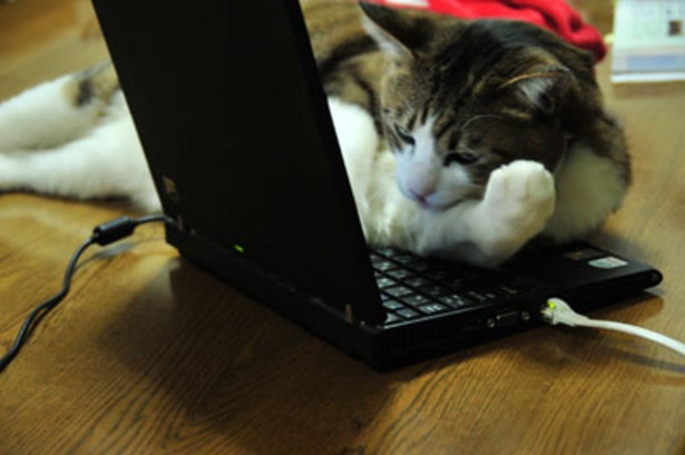 cat's typing2014