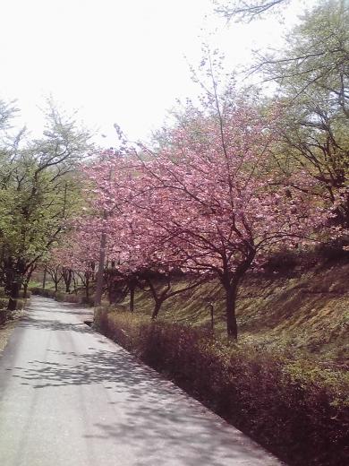 城ヶ山公園2