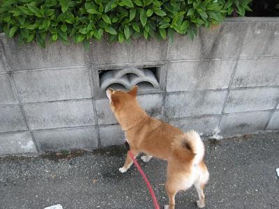 6周辺の嗅ぎこみ捜査