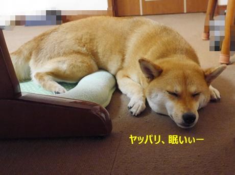 6ヤッパリ眠い
