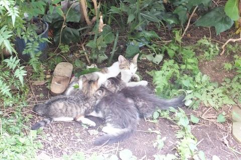 庭で休息中ー家