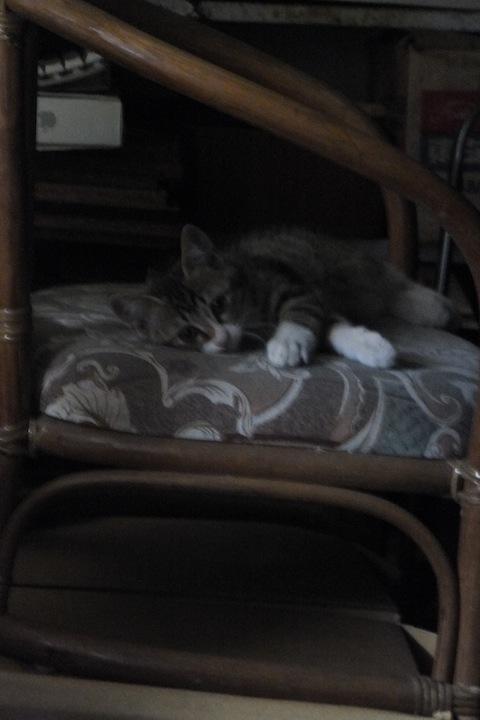 エミィの椅子