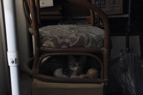 エミィの椅子2