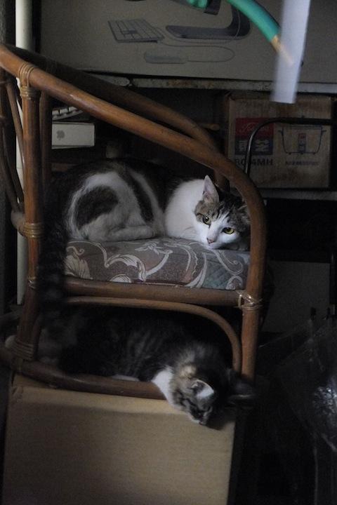 綾子椅子ー