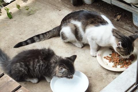 シマヲお母さんとご飯