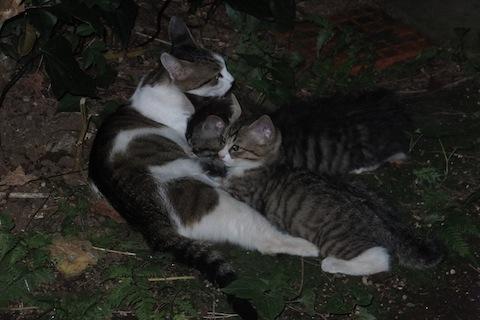 夕方の親子授乳