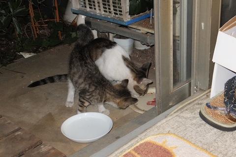 ダイニャとエミィ夕ご飯