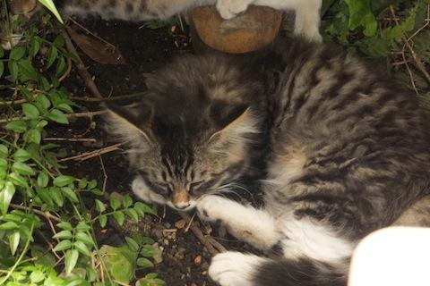 木陰でお昼寝シマを