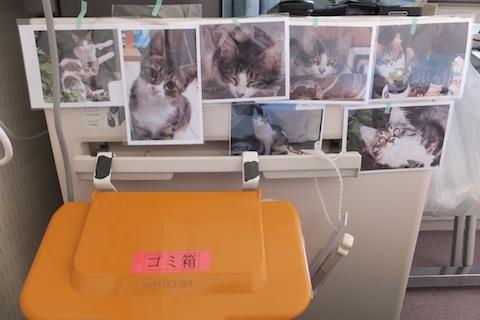 ベッドで待つ猫DSCF2679 のコピー