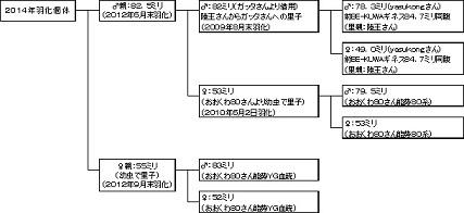 NYG82555血統背景20140726-12