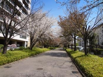 桜目当てに散歩しました [散歩道編]