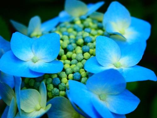 th_P6148260.jpg