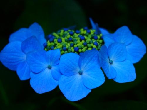 th_P6168330.jpg