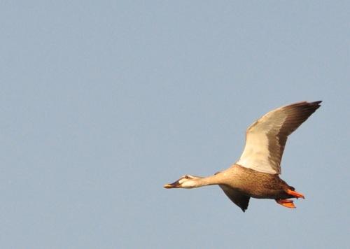 th_bird2.jpg