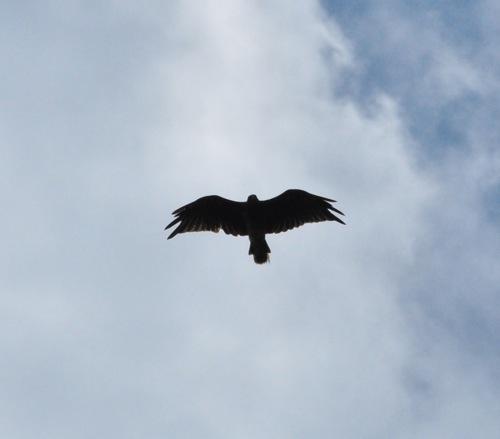 th_bird5.jpg