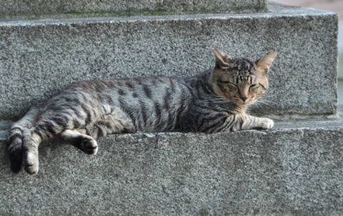 th_cat.jpg