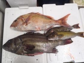 1鮮魚セット2014228