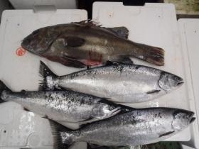 2鮮魚セット2014228